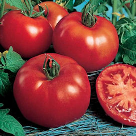 Rutgers Tomato **SOLD OUT FOR 2021**