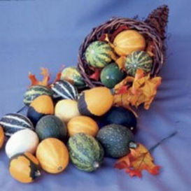 Small Ornamental Gourd Mix