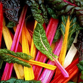 Northern Lights Mix Swiss Chard