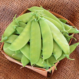 Mammoth Melting Sugar (Snow Pea) Edible Pod Pea