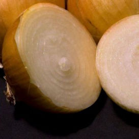Texas Grano 1015Y (Texas Supersweet) Onion