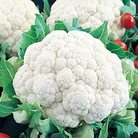 Snowball Y Improved Cauliflower