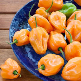 Habanero Orange Pepper