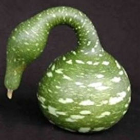 Speckled Swan Gourd