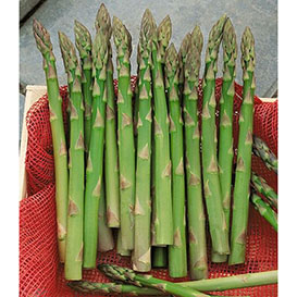 UC 72 (Mary's Granddaughter) Asparagus