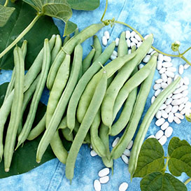 Mountaineer Half-Runner (Old Dutch Half Runner) Bean