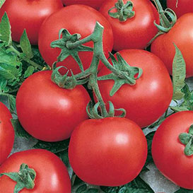 Early Doll (F1) Tomato