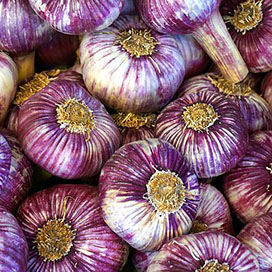 Chesnok Red Garlic (Hardneck)  **NEW CROP 06-07/2021**