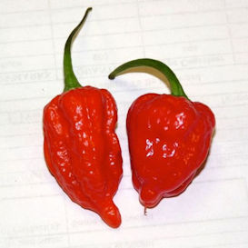 Ghost (Bhut Jolokia) Pepper
