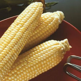 Sugar Buns Corn