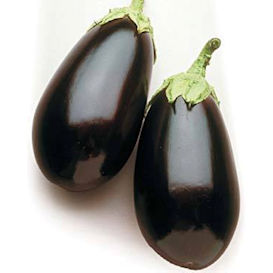 Night Shadow Eggplant