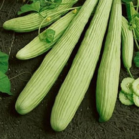 Armenian Yard Long (Snake Melon) Cucumber