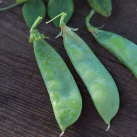 Oregon Sugar Pod II (Snow Pea) Edible Pod