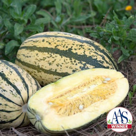 Sugaretti Winter Squash