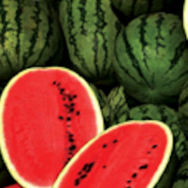 Peddler Watermelon