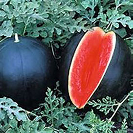 Black Tiger Watermelon
