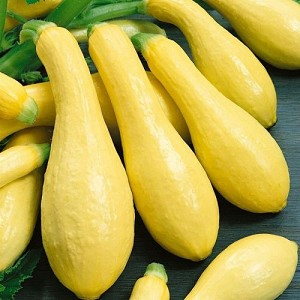 Early Prolific Straighneck Summer Squash