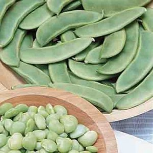 Early Thorogreen (Green Seeded Henderson) Lima Bean