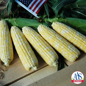 American Dream Corn