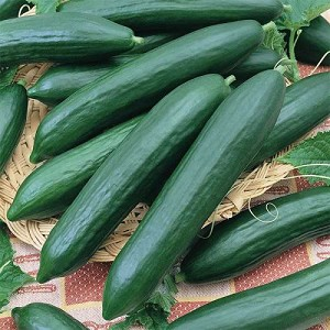 Tendergreen Burpless Cucumber