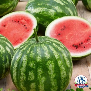 California Sweet Bush Watermelon