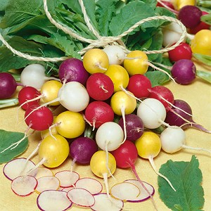 Crayon Colors Mix Radish